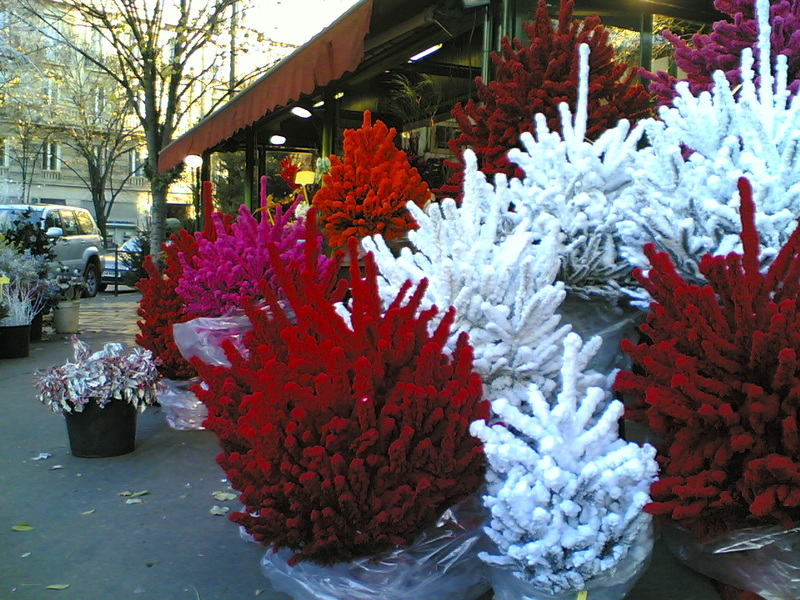 15:16  Samstag, 10. Dezember 2005<br /> French Christmas Trees?